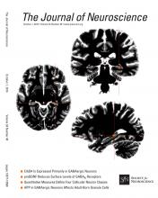 The Journal of Neuroscience: 34 (40)