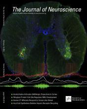 The Journal of Neuroscience: 34 (8)