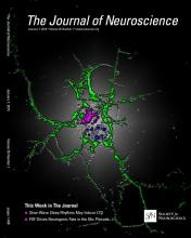 The Journal of Neuroscience: 35 (1)