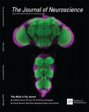 The Journal of Neuroscience: 35 (19)