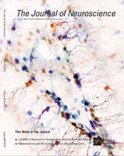 The Journal of Neuroscience: 35 (21)