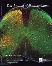 The Journal of Neuroscience: 35 (23)