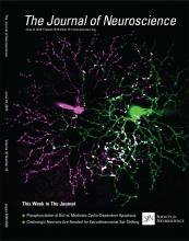 The Journal of Neuroscience: 35 (25)