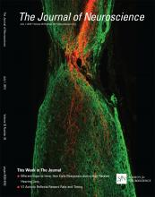 The Journal of Neuroscience: 35 (26)