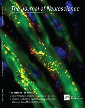 The Journal of Neuroscience: 35 (28)