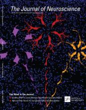 The Journal of Neuroscience: 35 (30)