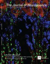 The Journal of Neuroscience: 35 (32)