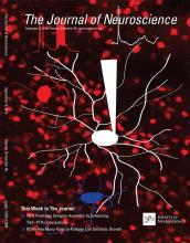 The Journal of Neuroscience: 35 (36)