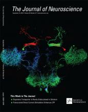 The Journal of Neuroscience: 35 (37)