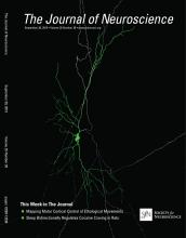 The Journal of Neuroscience: 35 (39)