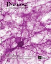 The Journal of Neuroscience: 35 (45)