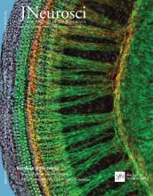 The Journal of Neuroscience: 35 (49)