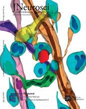 The Journal of Neuroscience: 36 (3)