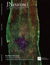 The Journal of Neuroscience: 36 (32)