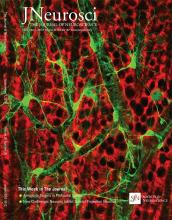 The Journal of Neuroscience: 36 (36)