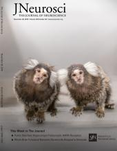 The Journal of Neuroscience: 36 (48)