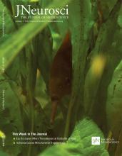 The Journal of Neuroscience: 37 (2)