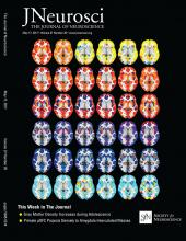 The Journal of Neuroscience: 37 (20)