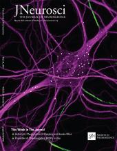 The Journal of Neuroscience: 37 (21)