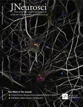 The Journal of Neuroscience: 37 (24)