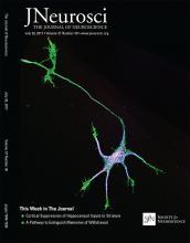 The Journal of Neuroscience: 37 (30)