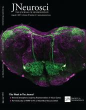 The Journal of Neuroscience: 37 (31)