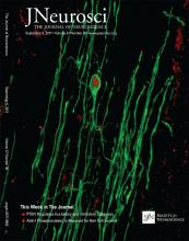 The Journal of Neuroscience: 37 (36)