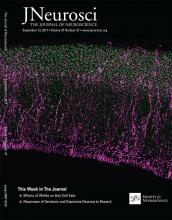 The Journal of Neuroscience: 37 (37)