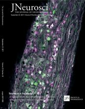 The Journal of Neuroscience: 37 (39)