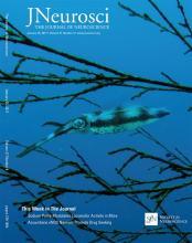 The Journal of Neuroscience: 37 (4)