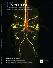 The Journal of Neuroscience: 37 (41)