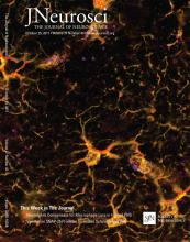 The Journal of Neuroscience: 37 (43)