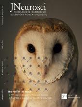 The Journal of Neuroscience: 38 (30)