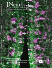 The Journal of Neuroscience: 38 (35)