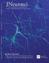 The Journal of Neuroscience: 38 (38)