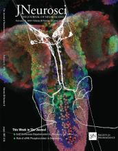 The Journal of Neuroscience: 38 (8)