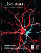 The Journal of Neuroscience: 39 (14)