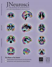 The Journal of Neuroscience: 39 (31)