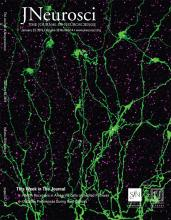 The Journal of Neuroscience: 39 (4)