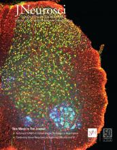 The Journal of Neuroscience: 39 (47)