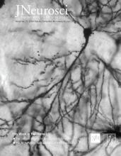 The Journal of Neuroscience: 39 (48)