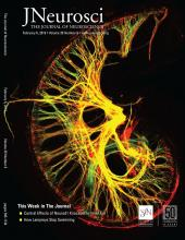 The Journal of Neuroscience: 39 (6)