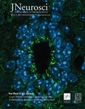 The Journal of Neuroscience: 40 (11)