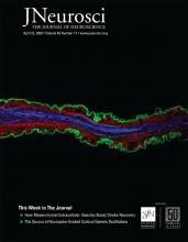 The Journal of Neuroscience: 40 (17)