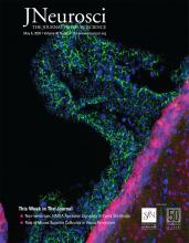 The Journal of Neuroscience: 40 (19)