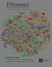 The Journal of Neuroscience: 40 (23)