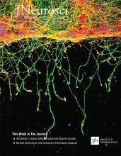The Journal of Neuroscience: 40 (31)