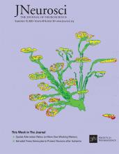 The Journal of Neuroscience: 40 (38)