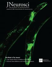 The Journal of Neuroscience: 40 (39)