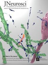 The Journal of Neuroscience: 40 (43)